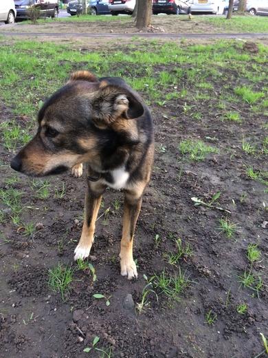 Найдена собака, фото 2