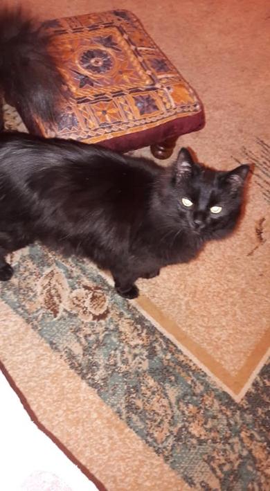 Потерялся кот Район Железной Дороги Горбатый мост