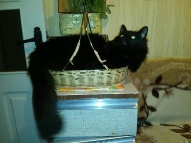 Потерялся кот Район Железной Дороги Горбатый мост , фото 2