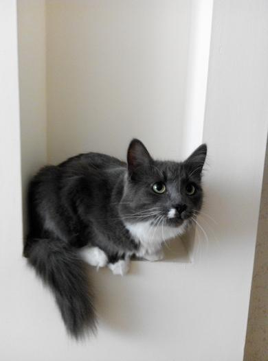 Потерялся кот в районе улицы Кабяка