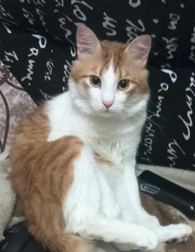 потерялся кот в районе ул.Куйбышева, 91