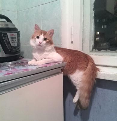 потерялся кот в районе ул.Куйбышева, 91, фото 2