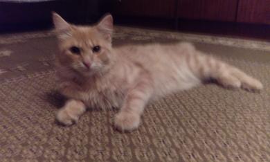 Потерялся кот, фото 3