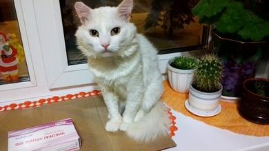 Потерялся Котик!