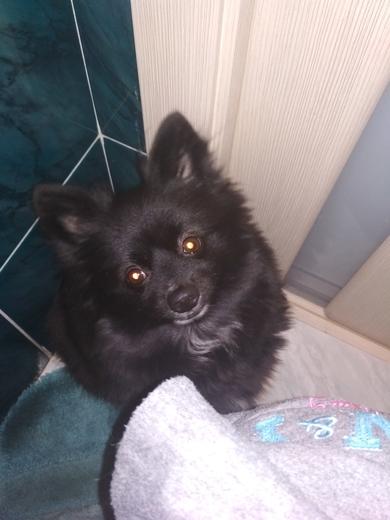 Собачка черная
