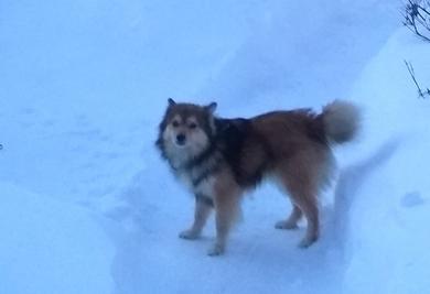 Пропал собака, фото 2