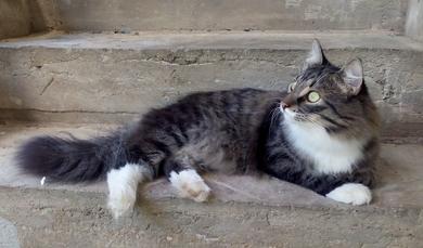 Потерялся кот Оскар