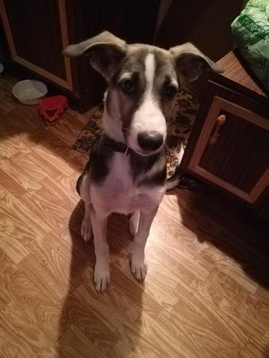 Найдена собака, срочно ищет хозяев! , фото 2