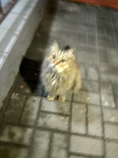 Ищу владельца Толстенький котик, фото 3