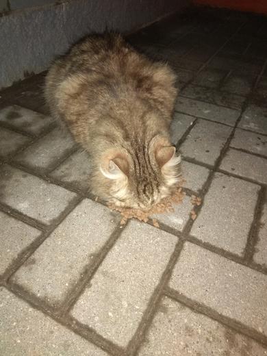Ищу владельца Толстенький котик
