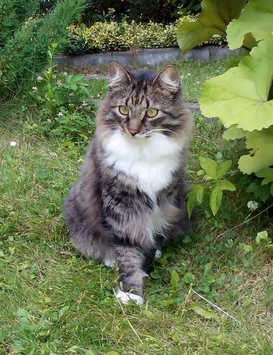 Потерялся кот Оскар, фото 2
