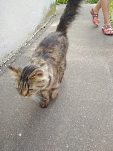 Кот  (кошка)  ул.  Семеняко , фото 2