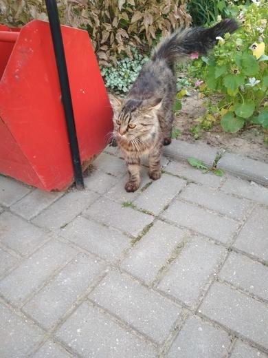 Кот  (кошка)  ул.  Семеняко
