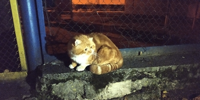 Замечен рыжий кот/кошка
