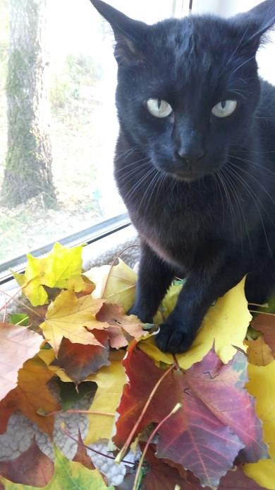 Потерялся черный кот