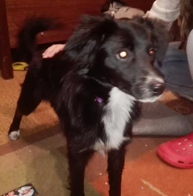 Найдена собака,  район ул. Одинцова,  с ошейником и поводком,  девочка.