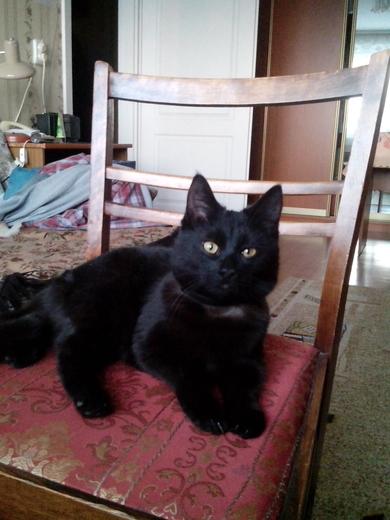черный котик подросток