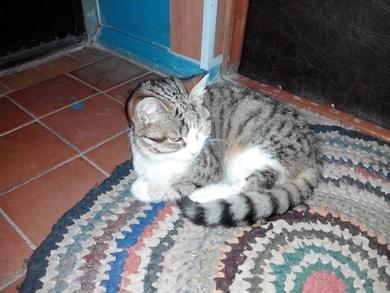 Найден кот (или кошка)