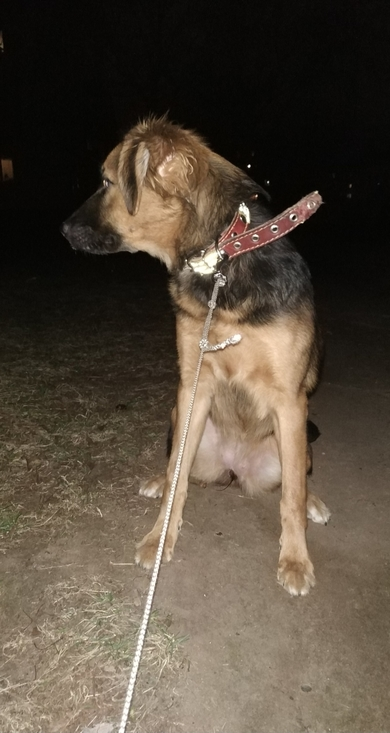 Потерялась собака,девочка, фото 2