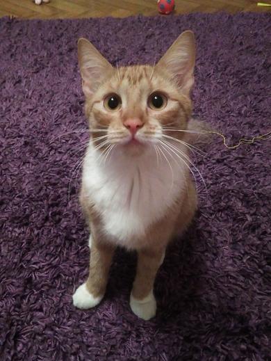 Потерялась кошка Радошковичи