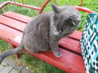 Чей большой голубой кот??? , фото 2
