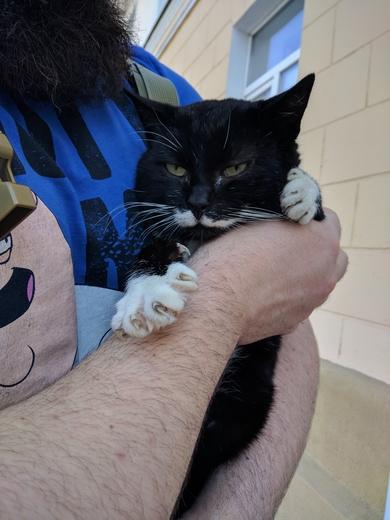 Найден кот, окрас ЧБ с белыми усами.