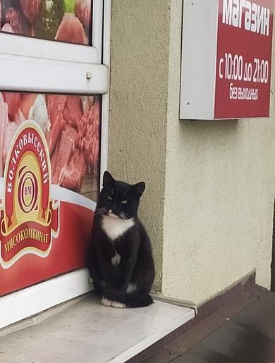Черный кот (кошка)