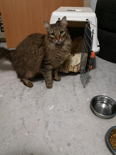 Найден кот (или кошка) на парковке возле Неманской 52