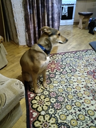 Нашлась собака с синим ошейником. , фото 2