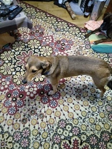 Нашлась собака с синим ошейником. , фото 3