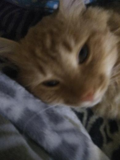 Найденному коту нужен дом или передежку
