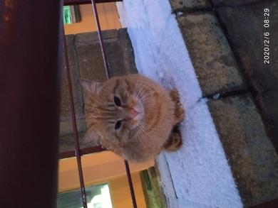 Рыжий кот на Скрипникова