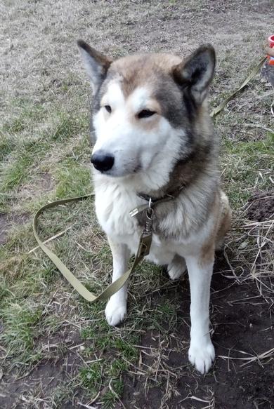Пропала собака, фото 4