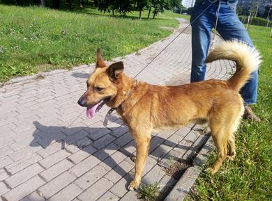 Собака(мальчик), м-н Серебрянка, Минск, 27.06, фото 2