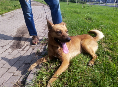Собака(мальчик), м-н Серебрянка, Минск, 27.06, фото 3