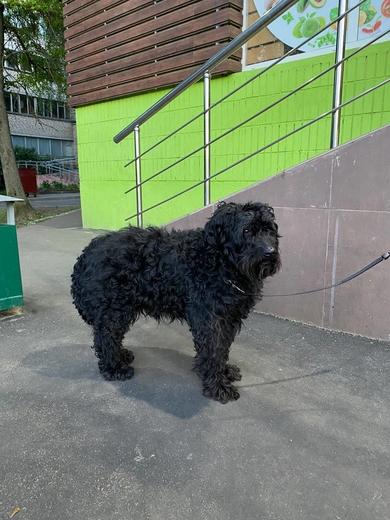 Собака у магазина