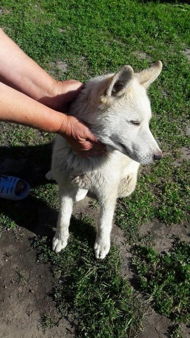 Найдена собака с глазами разного цвета, фото 4