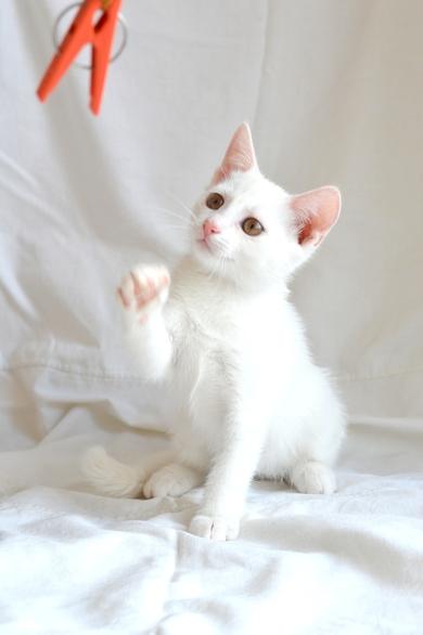 Белый котенок ищет дом!, фото 3