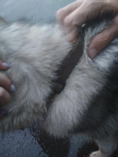 Найдена собака Хаски!, фото 3