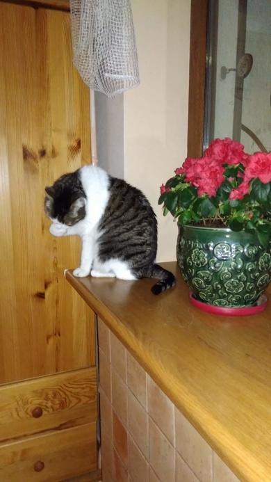 Пропал кот, фото 2