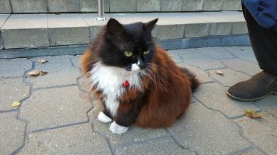 Найдена кошка на ул. Энгельса, 17