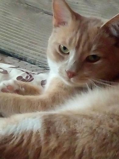 Потерялся кот Соломон
