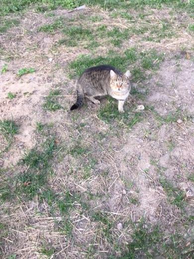 ПОТЕРЯШКА (кот или кошка) домашний, вначале был очень ласковый, сейчас - настороженный около месяца гуляет в районе ул.Жуковского, 19-29