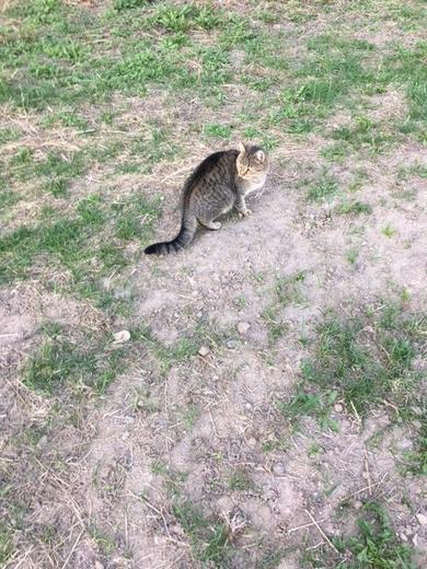 ПОТЕРЯШКА (кот или кошка) домашний, вначале был очень ласковый, сейчас - настороженный около месяца гуляет в районе ул.Жуковского, 19-29, фото 2