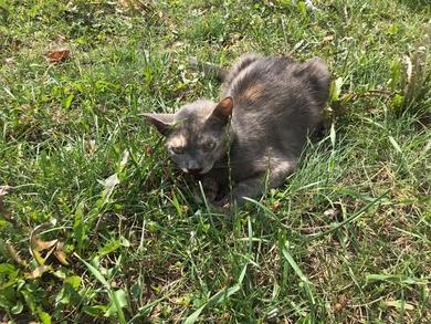 кот, фото 1