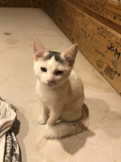Найден котенок потерянный. Каменная горка, Минск, 11.10.2021