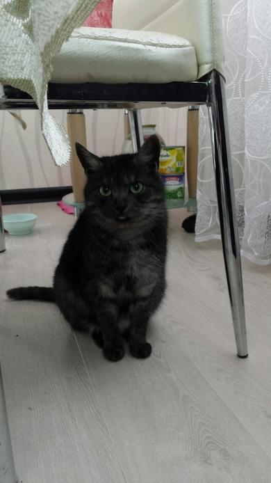 Молодая и очень красивая кошечка в дар, фото 2