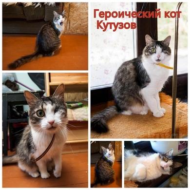 Героический кот Кутузов