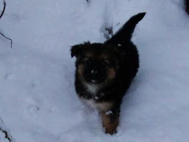 Очень красивый щенок в дар, фото 4