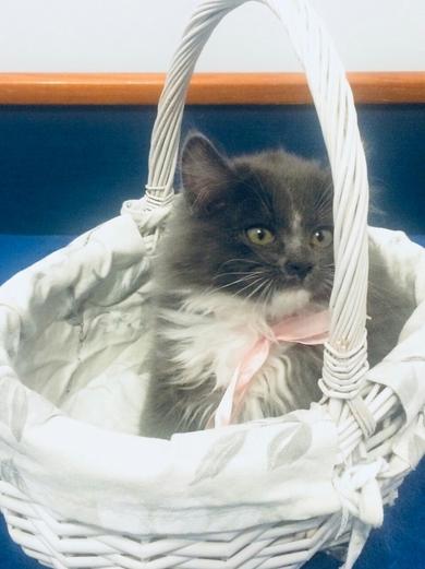 Очень красивый котенок в дар, фото 3